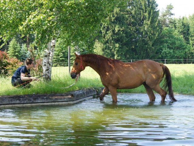 horsemanship-niederösterreich