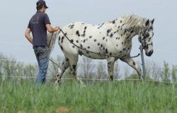 pferdeausbildung-niederösterreich
