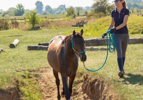 pferdeausbildung-niedersachsen