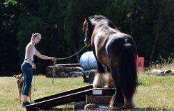 pferdeausbildung-pfalz