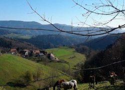 reitferien schwarzwald