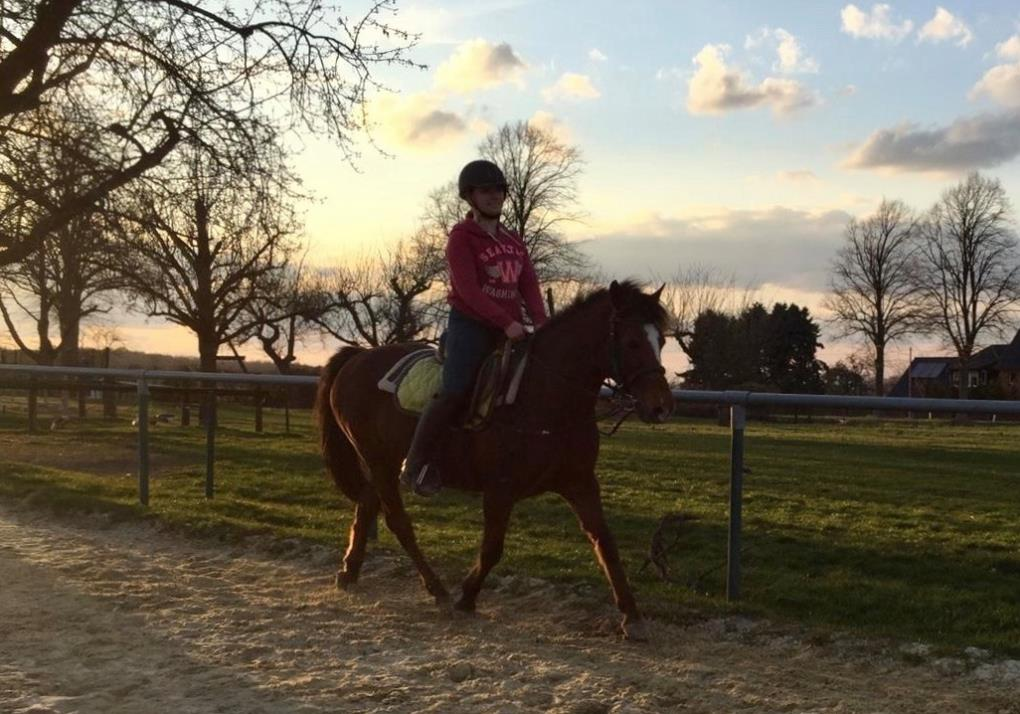 Erlebnis Pferd